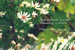 Every Flower Is a Soul Blossoming In Nature ~ Flower Quote