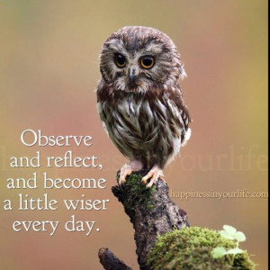 owls #inspiration #quotes