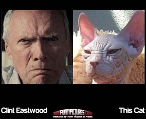 Clint Eastwood And This Cat – Funny Look Alikes
