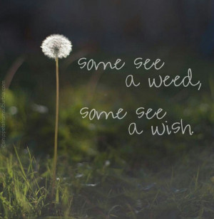 Some see a weed, Some see a wish.