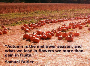 ... insects here are a few quotes about my favorite season of all fall