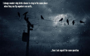 always wonder why birds to choose to stay in the same place