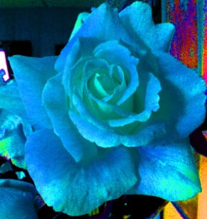 Blue Rose Quotes