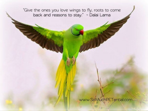 Give the one's you love wings to fly, roots to come back and reasons ...