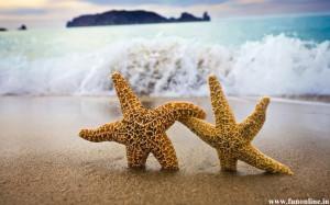 Pretty Starfish Pair Desktop Wallpaper