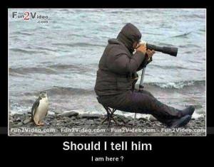 penguin-photography-funny-photo