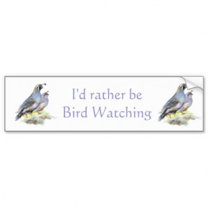 Rather be Bird Watching California Quail Quote Fun Car Bumper Sticker