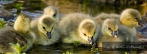 30+ Beautiful Cute Birds Facebook Cover Photos