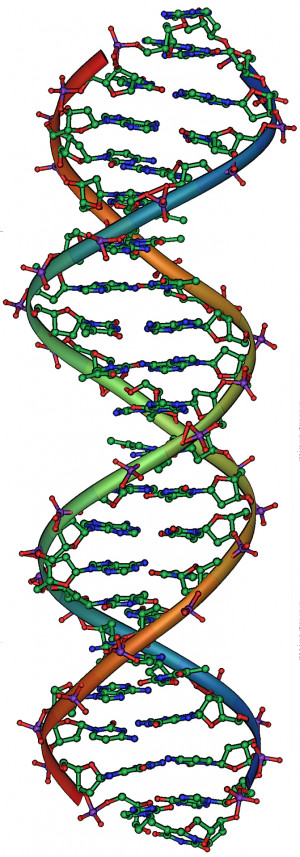 DNA structure (Image: Michael Ströck via Wikimedia Commons)