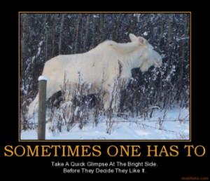 Funny Moose Sayings