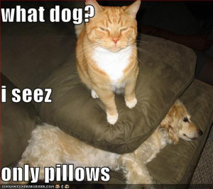 Very funny dog pictures with captions 'n' funny dog picture
