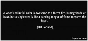 woodland in full color is awesome as a forest fire, in magnitude at ...