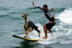 Funny Surfing (80)