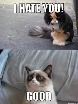 Angry cat vs. Grumpy cat