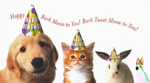 Pets birthday Wishes Photo