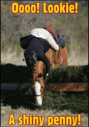 Lookie! A shiny penny! Horse jumping refusal fall cross country ...