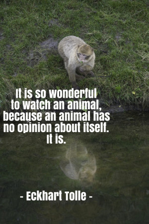 Quote by Eckhart Tolle about the being of animals... Photo: Barbary ...