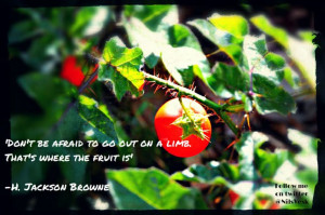 Don't be afraid to go out on a limb, that's where the fruit is' -H ...