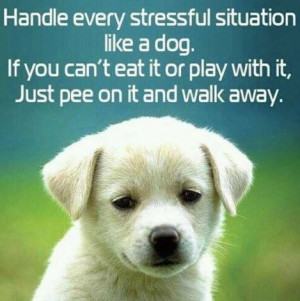 Dog quotes, funny dog quotes, dog lover quotes, best dog quotes ...