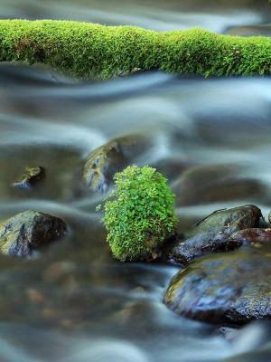 rolling stone gathers no moss
