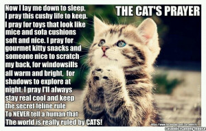 The Cat's Prayer