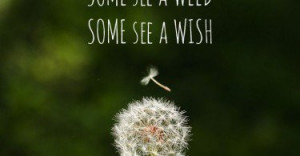 some-see-a-weed-wish-flower-life-daily-quotes-sayings-pictures-375x195 ...