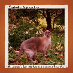 Posted in Cat Saturday , Cats , Contests & Giveaways , Feline Fine Art