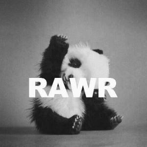 Black And White Cute Panda