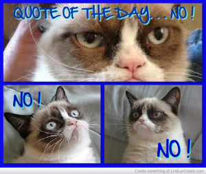 Grumpy Cat Quote Of The Day