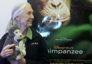 jane goodall and disneynature s chimpanzee the chimps filmed for