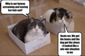 Funny Cat Dog Win Win Meme Picture