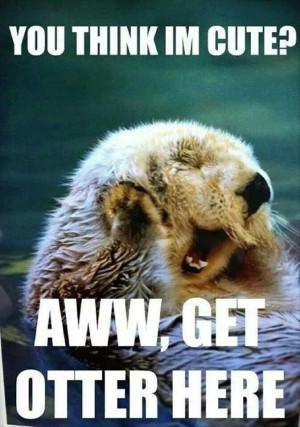 otter #cute #puns | www.sheddaquarium.org/sea-otters Laugh, Puns ...