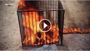 Here is the video of the Jordanian pilot being burnt alive. It is very ...