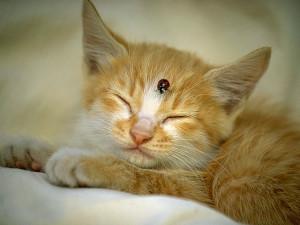 图片描述:可爱猫猫4