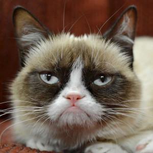 best-pictures-of-grumpy-cat-u2.jpg