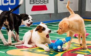 2015 Super Bowl and Pregame Puppy Bowl on the Big Screen