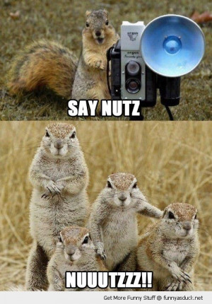 say nutz nuts cute squirrels animals taking family snap funny pics ...