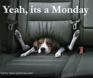 Hilarious Monday Blues Dog Joke Meme Image