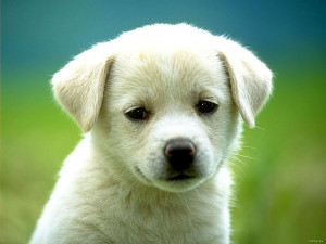 dogs and cats wallpapers, cute puppies and kittens wallpaper, cute dog ...
