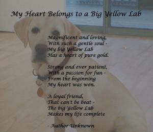 My yellow lab has my heart!