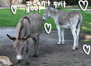 True Love Prevails! Donkeys Reunited After They Were Separated For ...