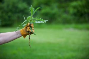Garden-weeds.jpg