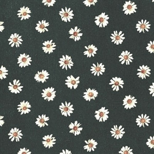 daisy flowers iphone wallpaper