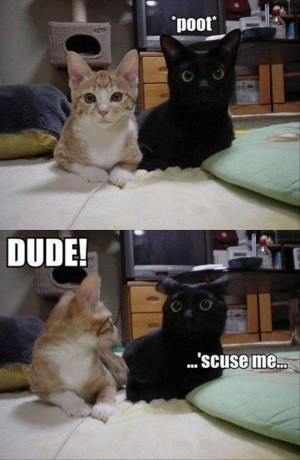 Funny Cat Pictures with Captions 3
