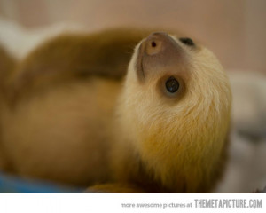 Funny photos funny baby sloth sleeping cute
