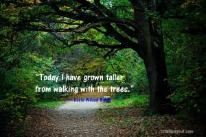 not an environmentalist. I'm an Earth warrior. ~Darryl Cherney ...