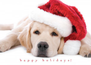 Cute Puppy Holiday - Christmas Cards from CardsDirect