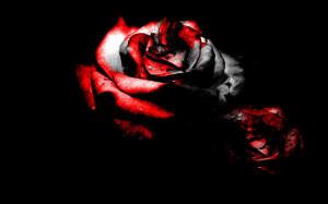 Blackened Blood Rose Background
