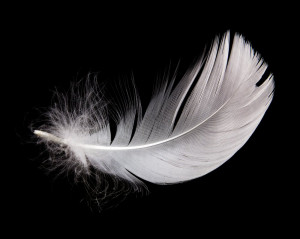 Accessories White swan goose feather trim trimming fringe feather