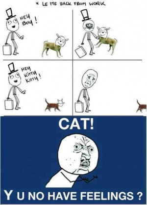 Cat have no feelings